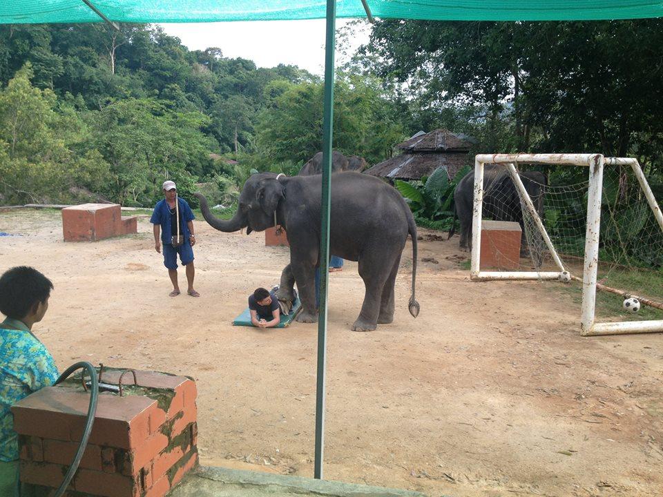tayland fil masajı
