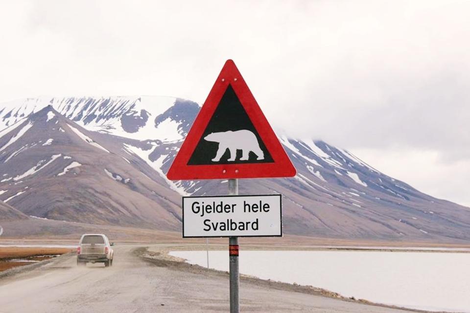 kutup ayısı çıkabilir