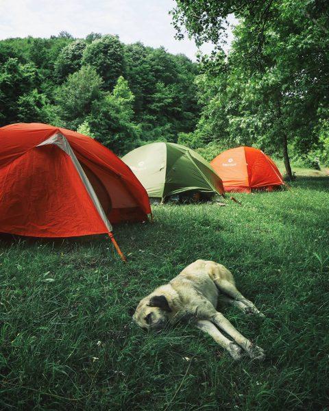 hacilli koyu kamp